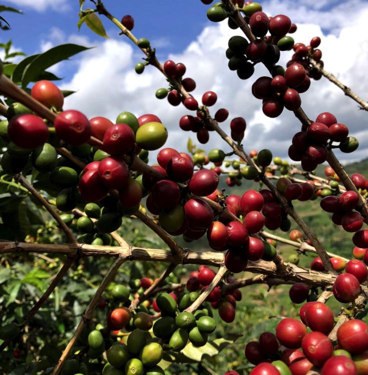 Jean is a young coffee farmer in Rwanda