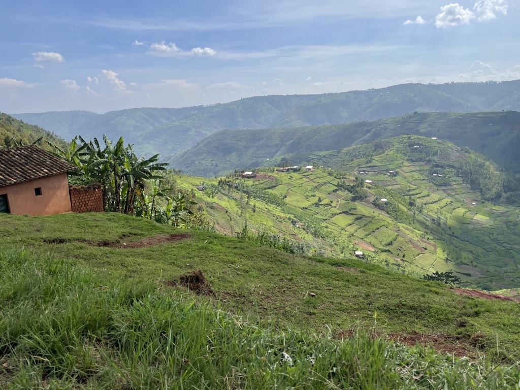 Video: bezoek aan biologische koffieplantage Rwanda